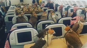 杜拜富豪為「80隻獵鷹買下80個飛機座位」,讓網友們都驚嘆!