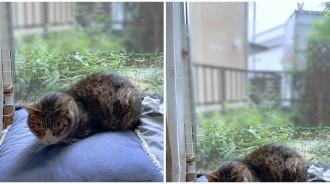 愛貓窗邊度咕「幫牠拍個照」~拍完驚見「另一個身影」秒變靈異照:你看到了嗎...