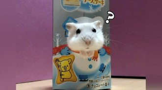 萌鼠「探頭拍照」完全不違和~超Q「3連拍」網融化:小熊餅乾換牠代言?