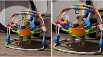 人家也是寶寶!毛毛巨嬰「霸佔玩具椅」還懂伸腳腳 一臉呆萌「狂打哈欠」網笑:好大一隻
