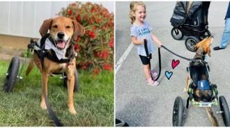 曾被前飼主斷腿...愛笑汪重生「當上治癒犬」 穿風火輪「療癒人類」:我可以你也可以!