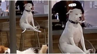 去日托中心卻「不想跟其他狗狗互動」!汪「臉臉超厭世」端坐椅子:老娘可以回家了沒?