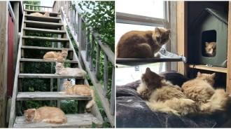 買二手農舍竟「附贈15隻貓咪」!夫妻「扛起照顧責任」成萌喵天堂:每天吸到飽~