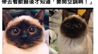 她家的貓咪臉一天比一天黑主人都慌了,帶去看獸醫後才知道「要開空調啊!」