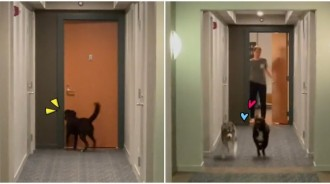 有人在家嗎~萌汪每天敲門「找鄰居哈串門子」 一起「散步吃點心」好黑皮:有你真好❤️