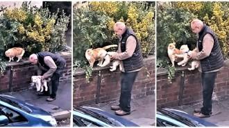 帶小狗散步「巧遇貓鄰居」!老先生暖抱愛犬「認識打招呼」:要不要交個朋友呀~
