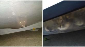 兒喊「床底有怪物」...她低頭查看竟「眼發綠光」一臉卡卡:還不快來救駕!