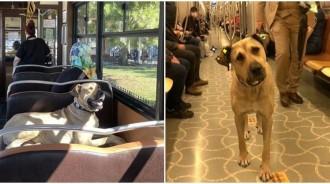 浪汪每天「獨自搭地鐵旅行」成網紅!還會「乖乖排隊」融化乘客搶自拍:想巧遇~